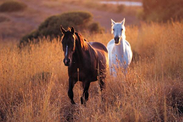 2-horses.jpg