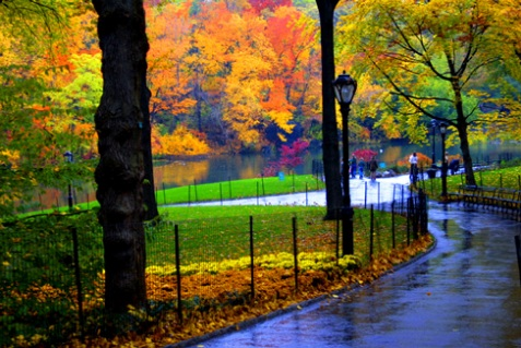central-park-fall-leaves.jpg